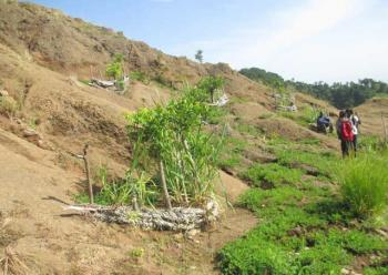 Hillside resoration in Doucet, Haiti in 2013. The plants spreading on the right are peanuts..jpg